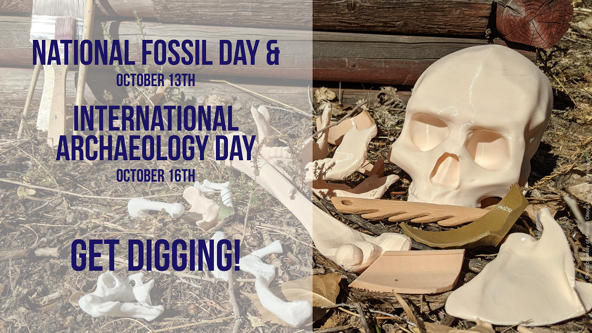 Fossil Day blog banner
